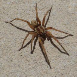 Уничтожение пауков в Москве